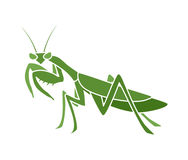 Mantis illustration Stock Images