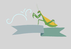 Mantis Insect Banner Stock Photos