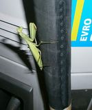 Mantis. An insect working on a gas station Stock Photography