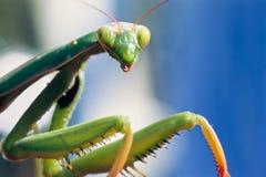 Mantis looking at you Stock Image