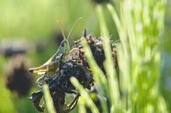 Mantis macro Stock Photo