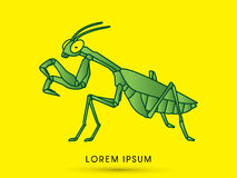 Mantis Mantodea grasshopper. Graphic vector Royalty Free Stock Photo