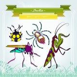 Mantis mosquito spider beetle Stock Photo