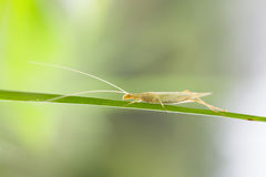 Mantis. The picture is taken in 2016 Stock Images