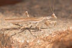 A mantis portrait Stock Photo