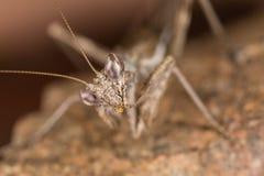 A mantis portrait Stock Image