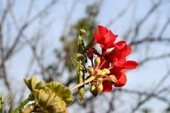 Mantis. Praying mantis on a blooming red flower Stock Photos