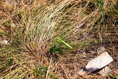 Mantis religiosa on the grass Stock Photo