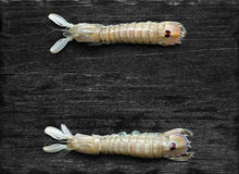 Mantis Shrimp on the black background Royalty Free Stock Image