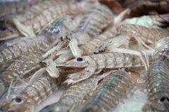 Mantis Shrimp Crayfish In Fresh Seafood Market stock photography