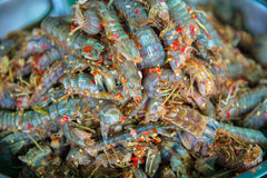 Mantis shrimp Stock Photos