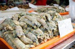 Mantis shrimp Stock Photos