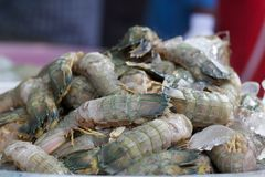 Mantis shrimp Royalty Free Stock Photos
