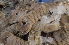 Mantis shrimp. For sale at the local market Stock Photography