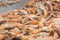 Mantis Shrimp in seafood market Stock Image