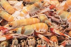 Mantis Shrimp in seafood market Royalty Free Stock Image