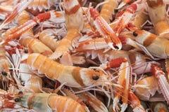 Mantis Shrimp in seafood market Stock Images