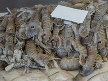 Mantis shrimps cicadas close-up on the bench of the fish marke royalty free stock photography