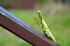 Mantis on the rail. Big green mantis sitting on the inclined brown metal rail Stock Photos