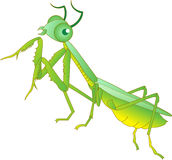 Mantises. Vector drawing of a cute and friendly praying mantis character Stock Photos