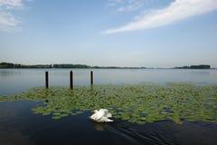 Mantua überlegener See, Italien Stockfotos
