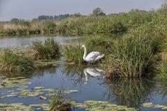 Mantua, Italy, Mincio river Royalty Free Stock Photos