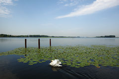 Mantua Superior lake,  Italy Stock Photos
