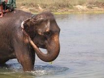 Elefantbad Arkivbild