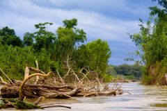 Manu River royalty free stock photography