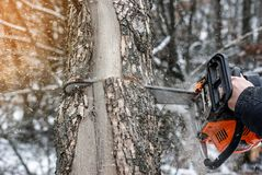 Manual chainsaw. Man hands, saws a tree in the woods in winter a Royalty Free Stock Photos