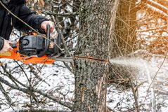 Manual chainsaw. Man hands, saws a tree in the woods in winter a Royalty Free Stock Images