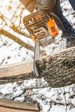 Manual chainsaw. Man hands, saws a tree in the woods in winter a Royalty Free Stock Photo