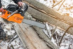 Manual chainsaw. Man hands, saws a tree in the woods in winter a Royalty Free Stock Image