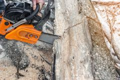 Manual chainsaw. Man hands, saws a tree in the woods in winter a Stock Photo