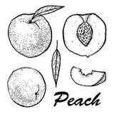Manual drawing of peach ink. Set whole peach and slices. Botanical food illustration. Vector illustration with sketch Stock Image