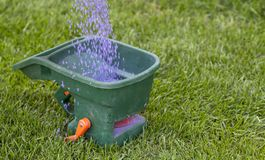 Manual fertilizing of the lawn in back yard in spring time. Close up royalty free stock photography