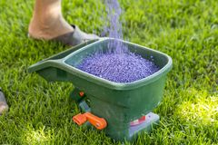 Manual fertilizing of the lawn in back yard in spring time. Close up