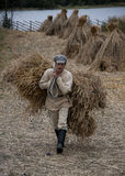 Manual harvesting of wheat on small farm in Northern Russia. Royalty Free Stock Images