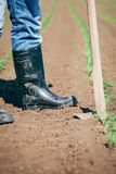 Manual labor in agriculture Royalty Free Stock Photography