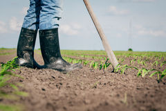 Manual labor in agriculture Royalty Free Stock Photos