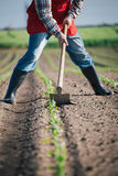 Manual labor in agriculture Royalty Free Stock Images