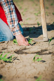 Manual labor in agriculture Stock Images