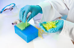 Manual labor in the laboratory Stock Photography