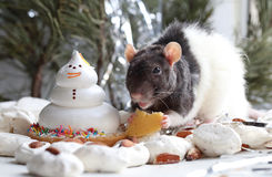 Manual mouse eating cheese on the holiday table. Next to the cake Stock Image