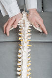 Manual, physio and kinesio therapy techniques. Performed by a male physiotherapist on a training plastic spine and a female patient stock photos