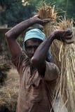 Manual rice threshing Royalty Free Stock Image
