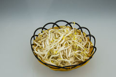 Manual small basket, put the bean sprouts bean. Small and exquisite handmade basket, put the bean sprouts with bean, very healthy dishes Royalty Free Stock Photography