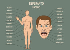 The manual for the study of the language Esperanto. The human body, a human head. Training Material for the Esperanto language Royalty Free Stock Photography