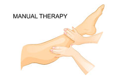 Manual therapy. women`s leg. foot massage stock illustration