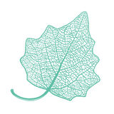 Manually drawn leaf skeleton Stock Photos